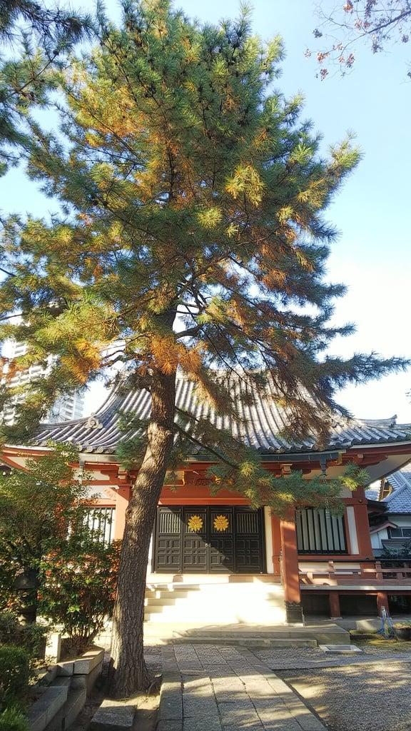 本光寺の本殿