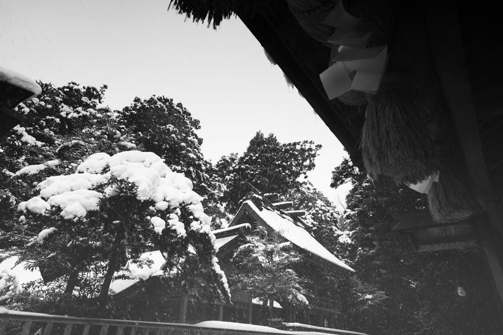 須佐神社の自然(島根県江南駅)