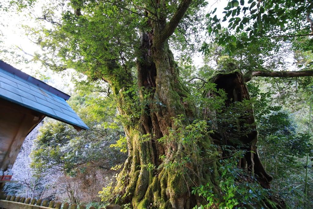峯寺の自然