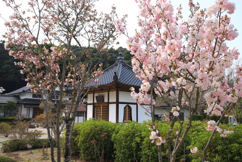 勝定寺の庭園
