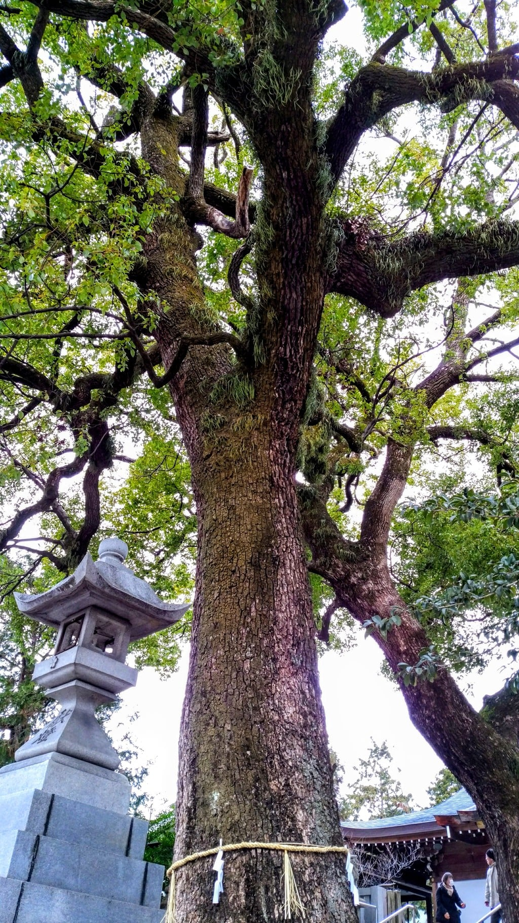 加納天満宮の自然