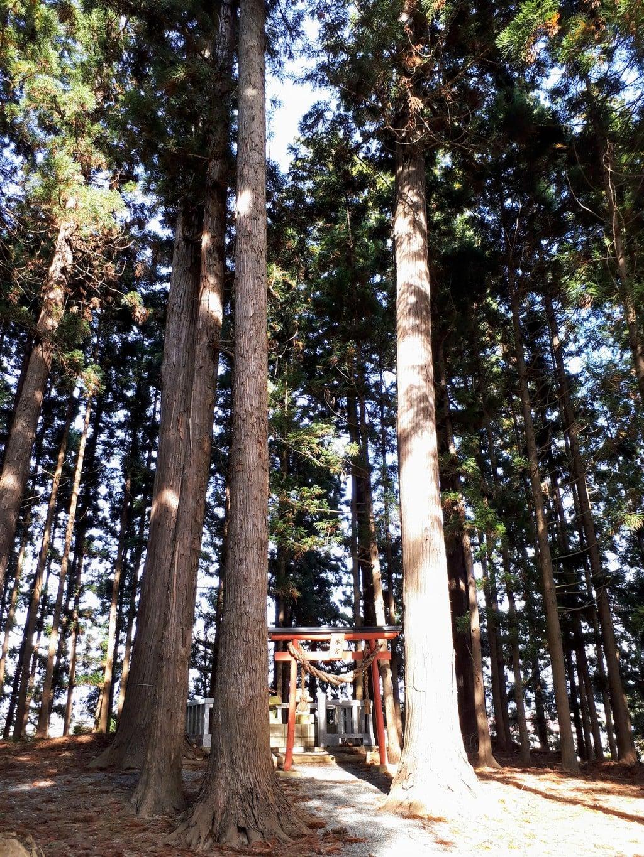 三獄神社の自然
