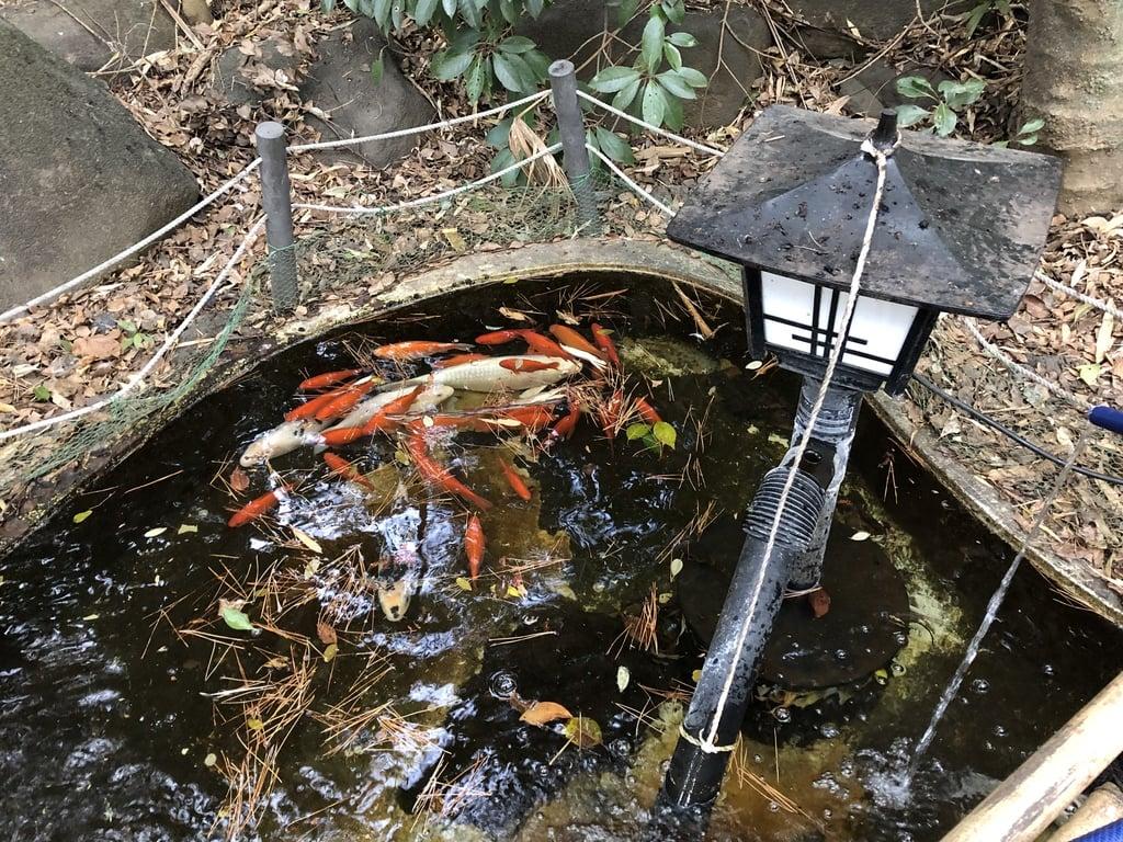 篠崎浅間神社の庭園