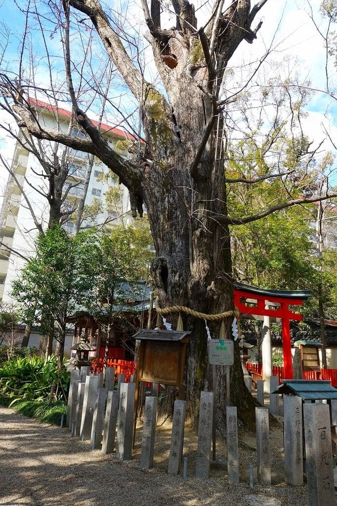 杭全神社の自然(大阪府平野(JR)駅)