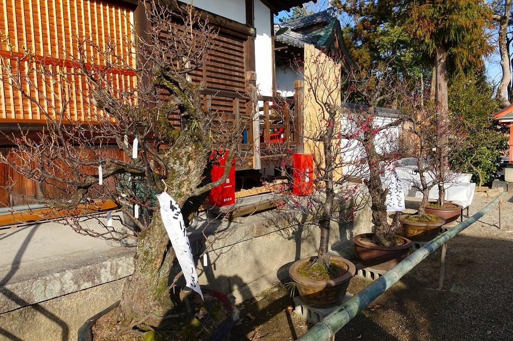 菅原天満宮(菅原神社)の自然