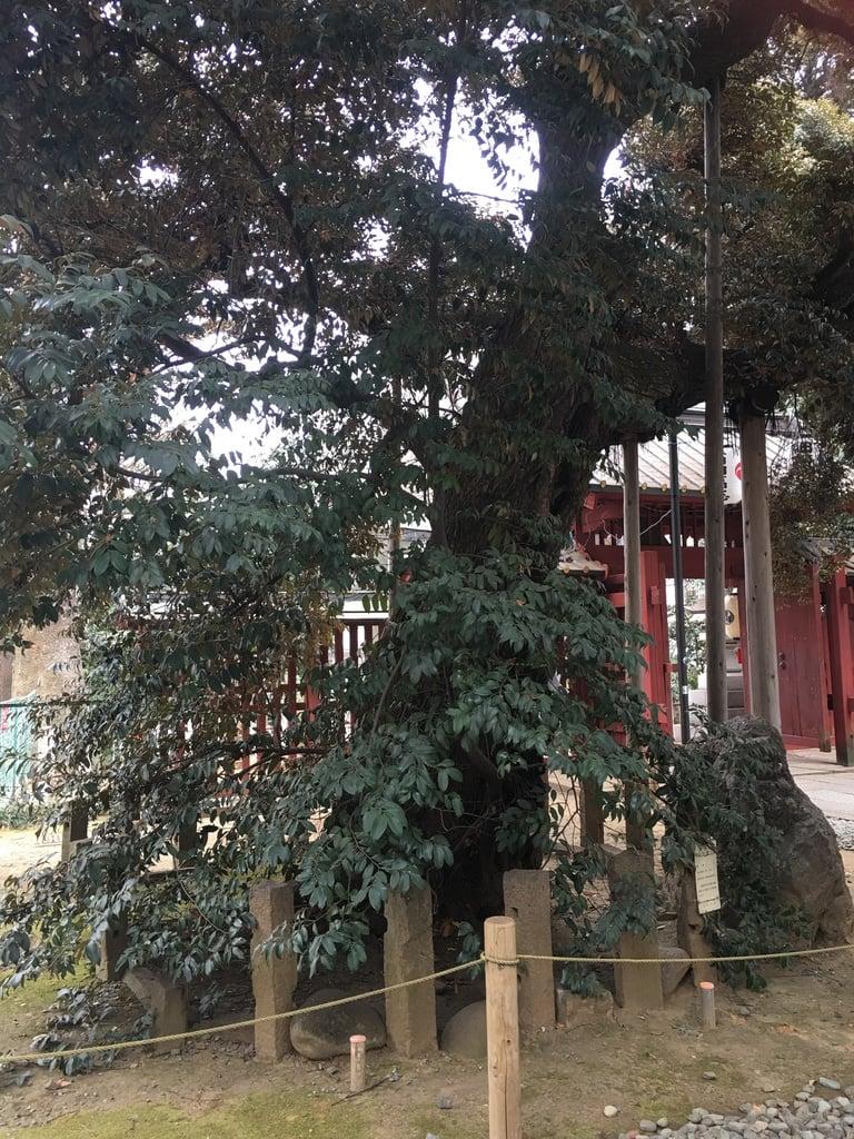 金王八幡宮の建物その他
