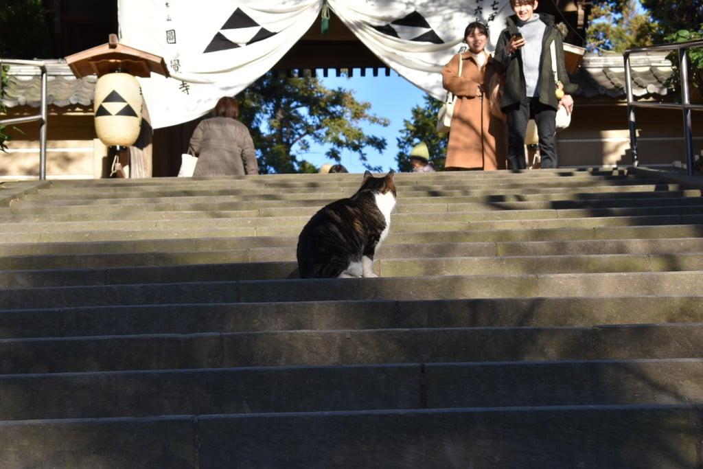 円覚寺の動物