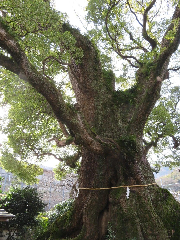 五所神社の自然