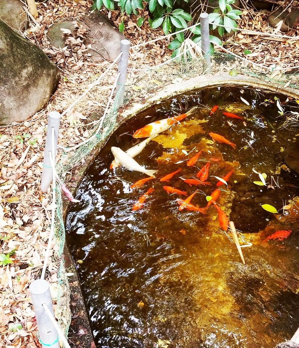 篠崎浅間神社の動物