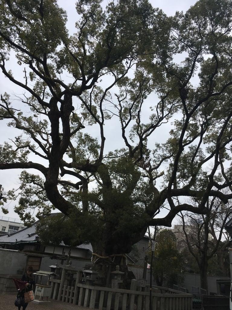 杭全神社のその他建物(大阪府平野(JR)駅)