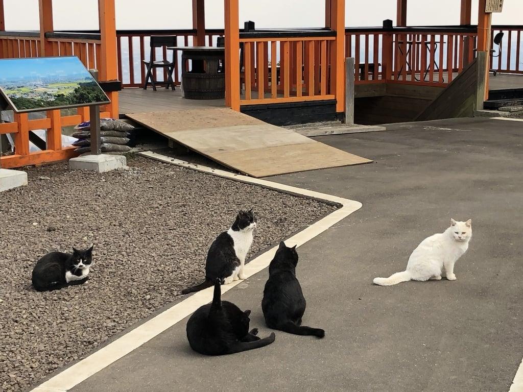 熊野那智神社の動物