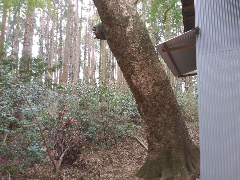 諏訪神社(茨城県大洋駅)