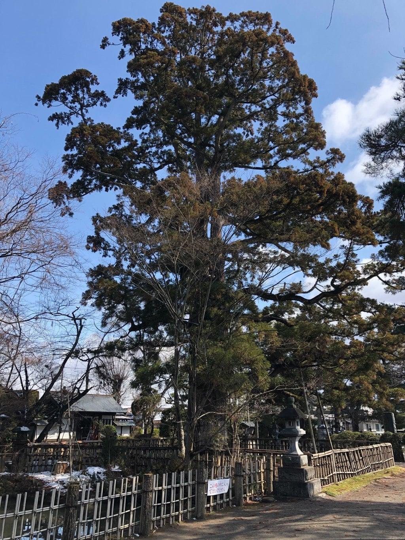 日高神社の自然