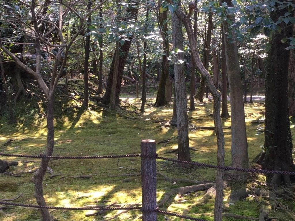 妙興報恩禅寺(妙興寺)の自然