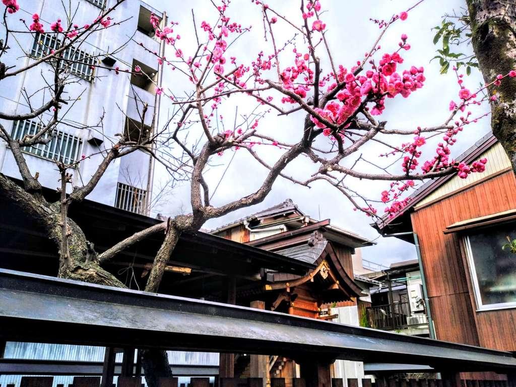 北野神社の自然