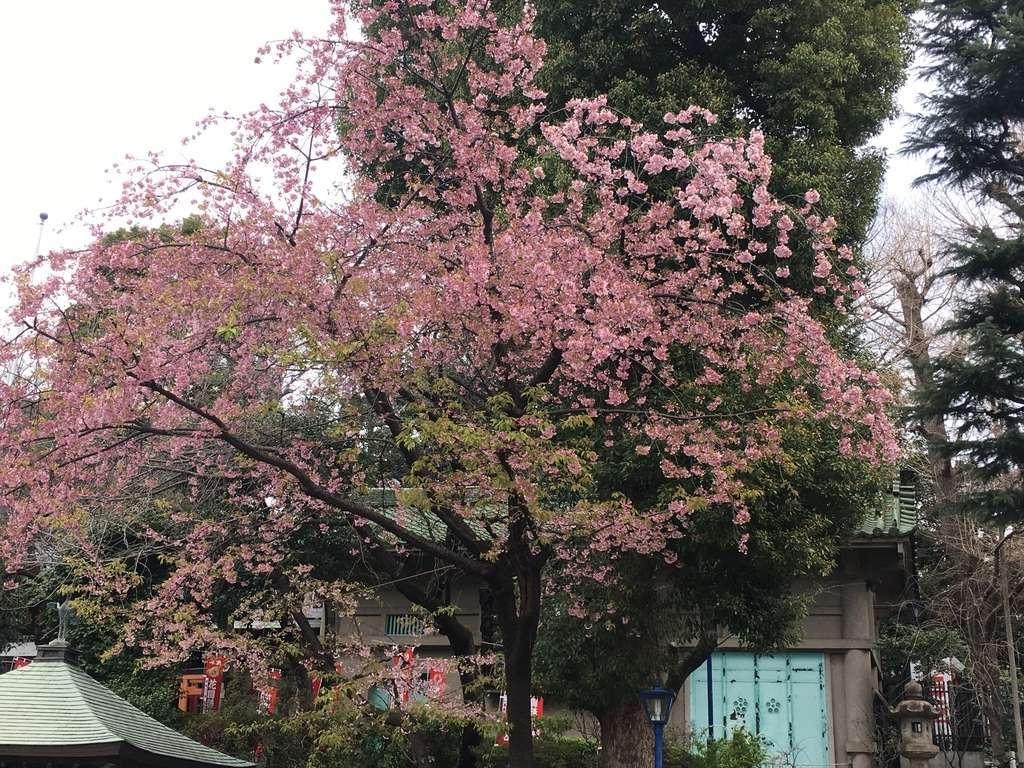 五條天神社の自然