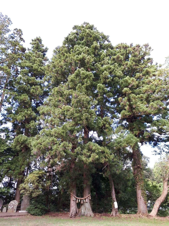 神明神社の自然