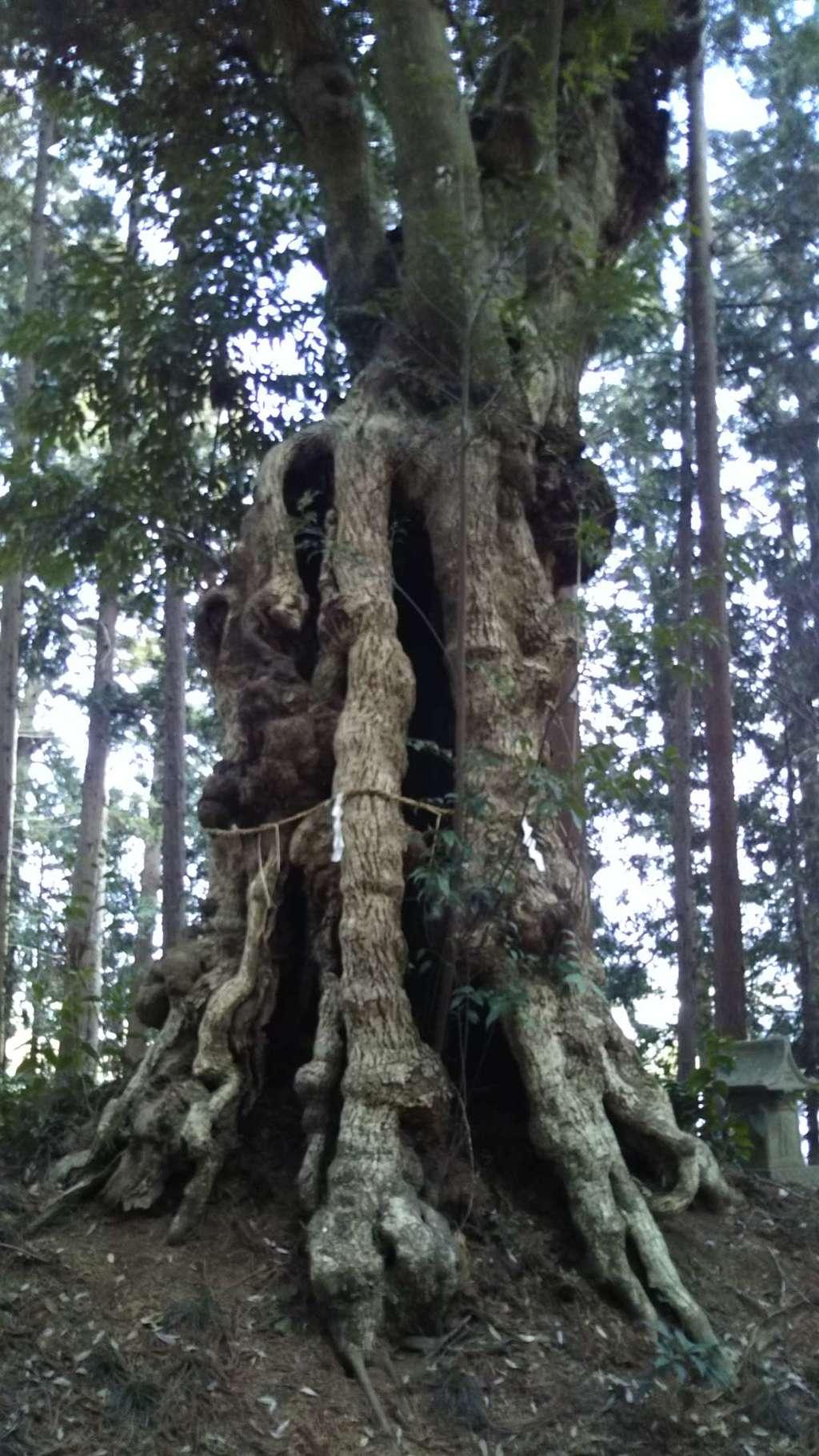 十二所神社の自然