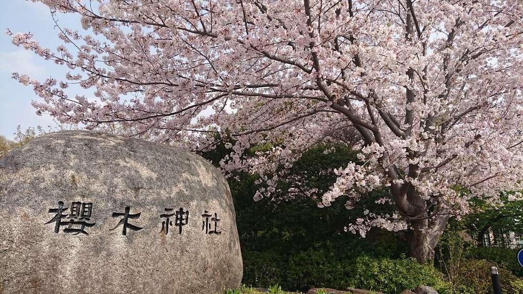 櫻木神社の自然