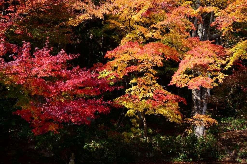 宝珠山 立石寺の庭園
