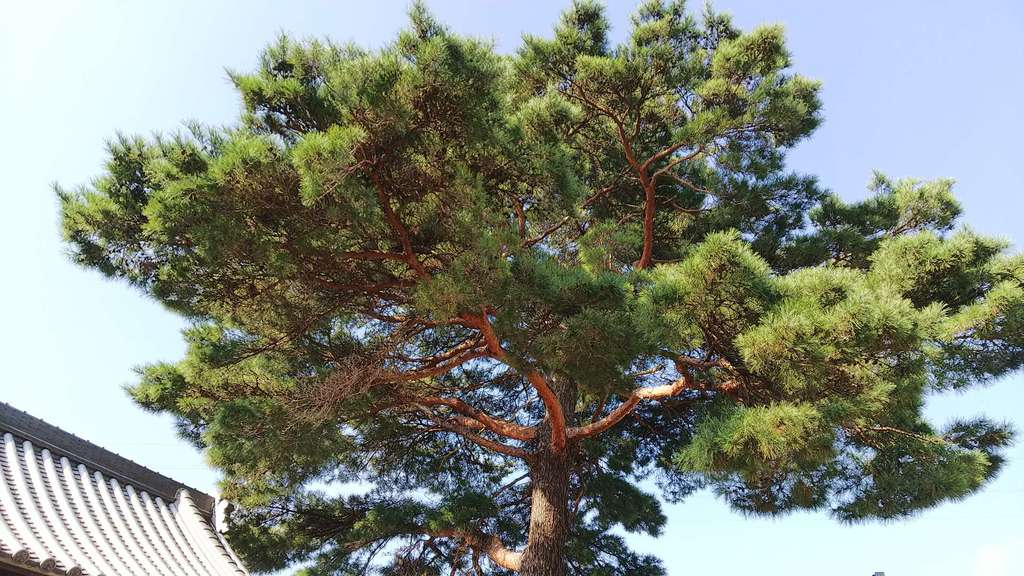 林光寺の自然