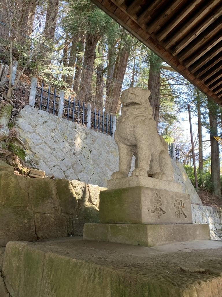櫻山八幡宮の狛犬