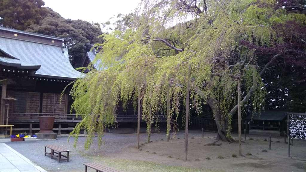 常陸第三宮 吉田神社の自然(茨城県水戸駅)