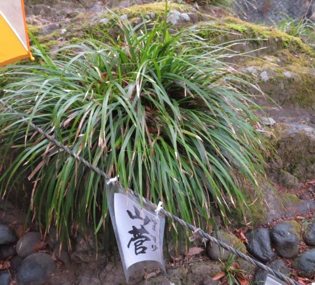 神橋(二荒山神社)の自然