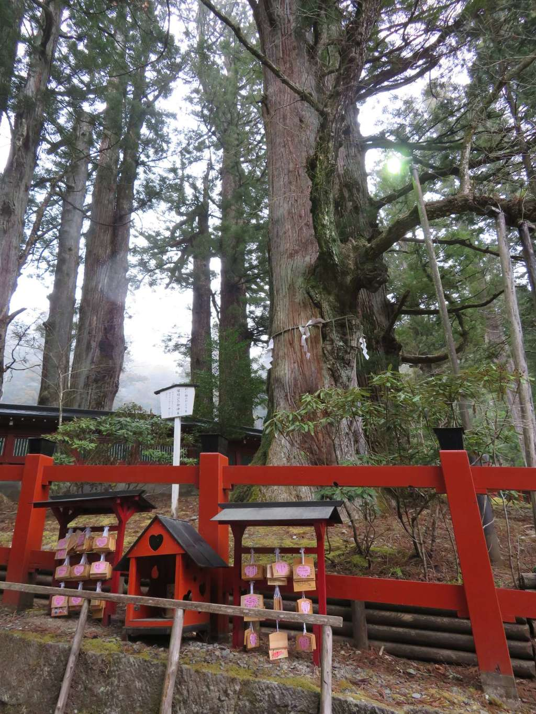 日光二荒山神社の自然