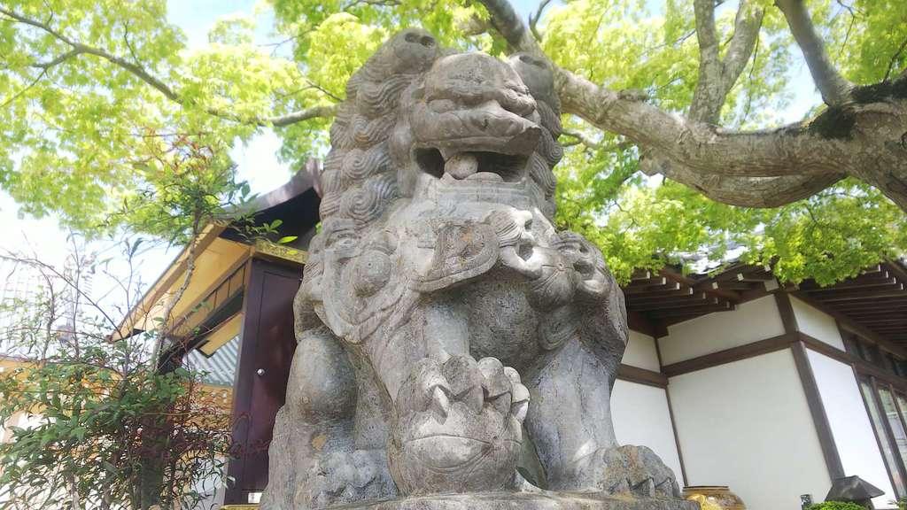 豊泉寺の狛犬