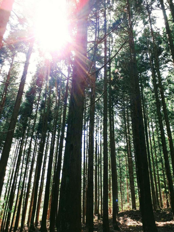 出羽神社の自然