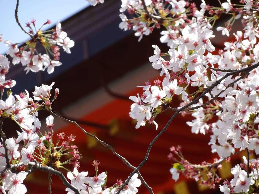 八坂神社(祇園さん)の自然