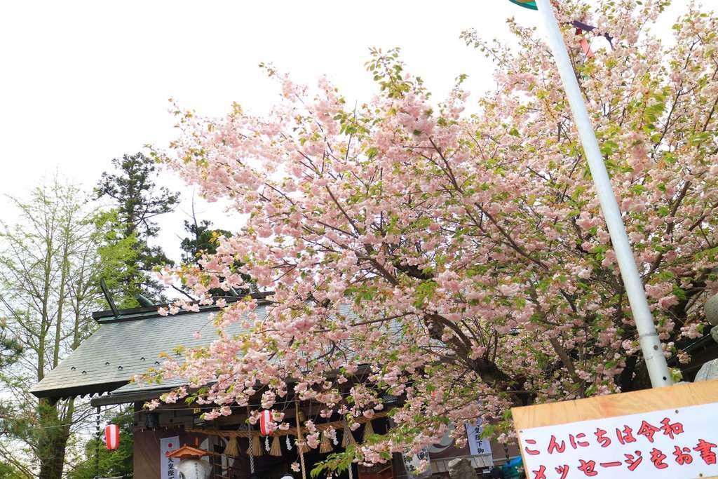 二柱神社の自然