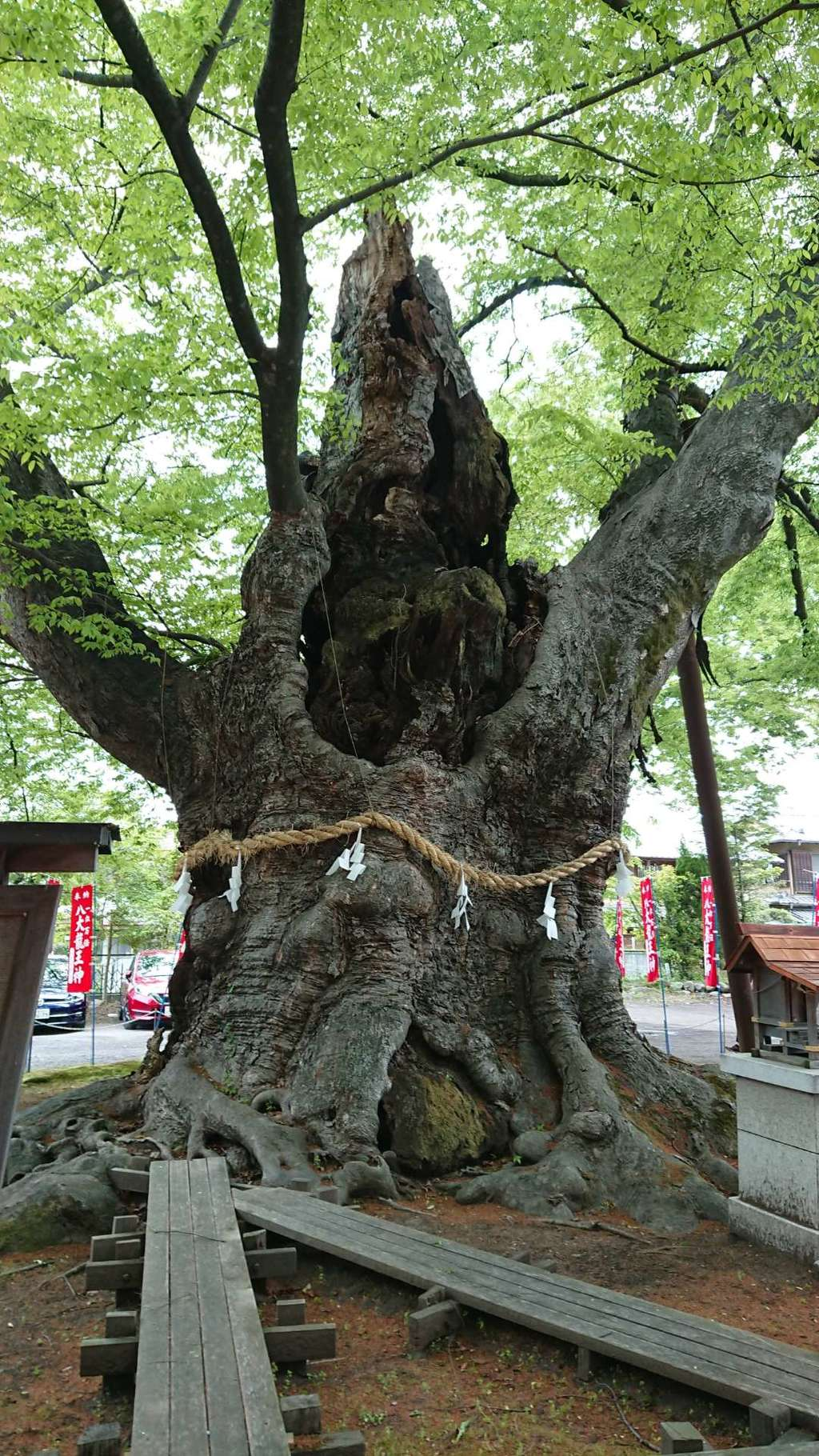 秩父今宮神社の自然