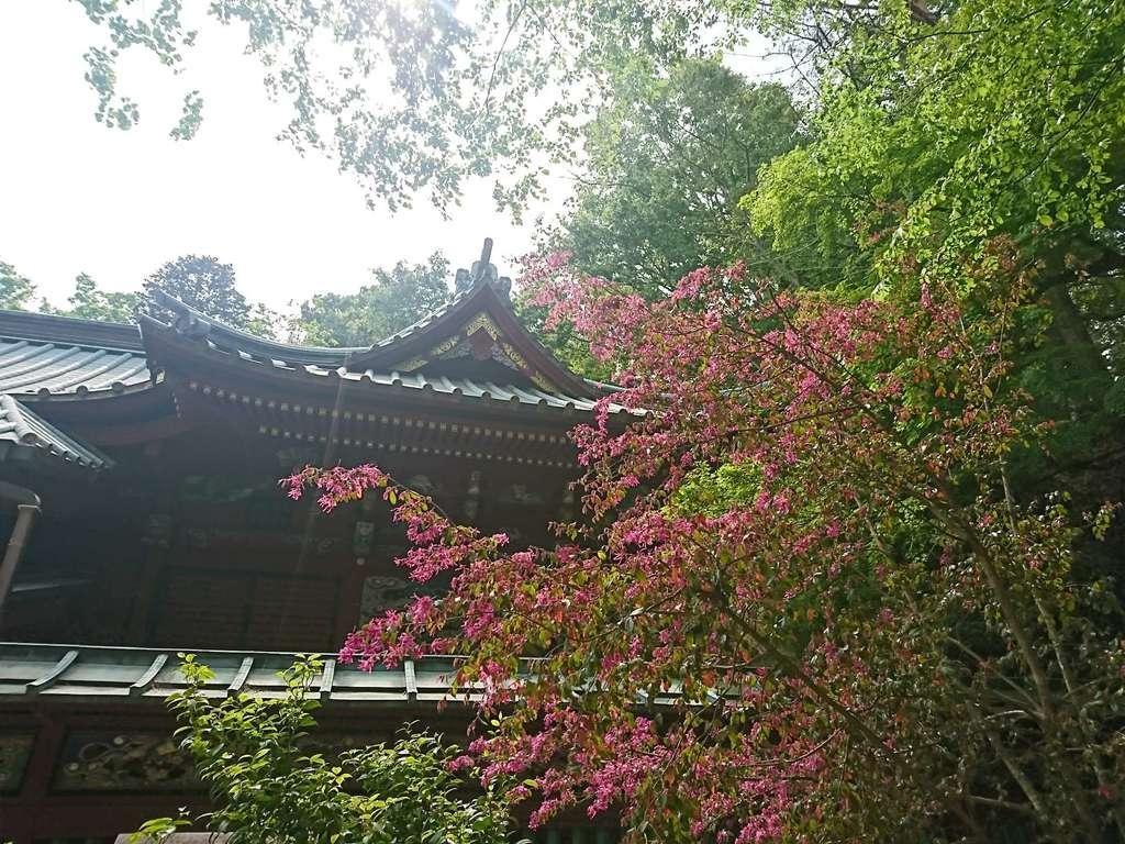 高尾山薬王院の庭園