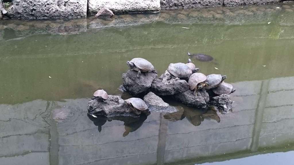 磐井神社の動物