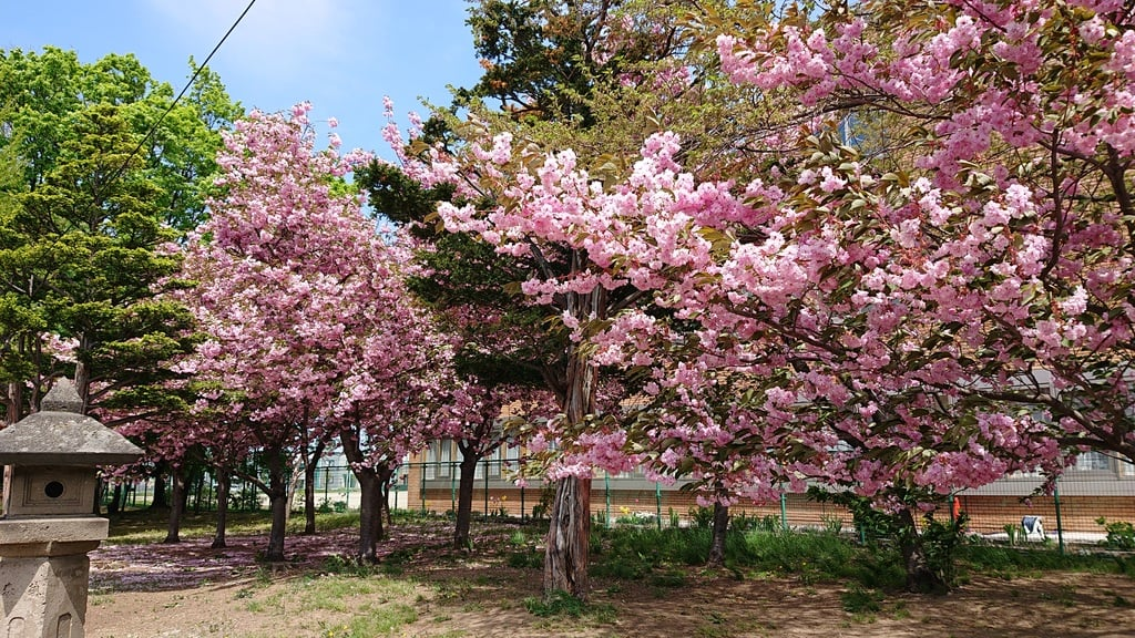 江南神社の自然