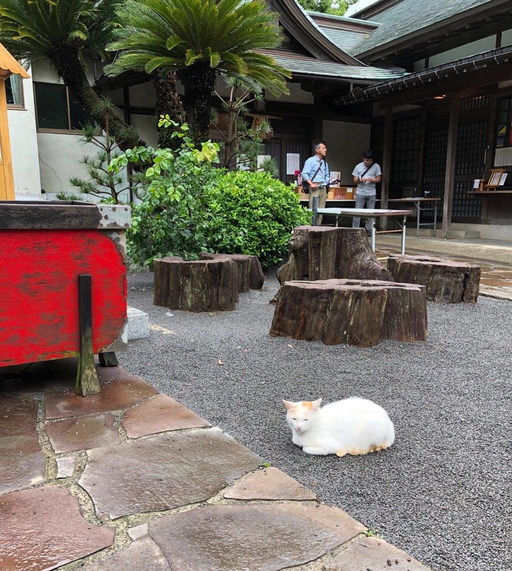 伊豆山神社の動物