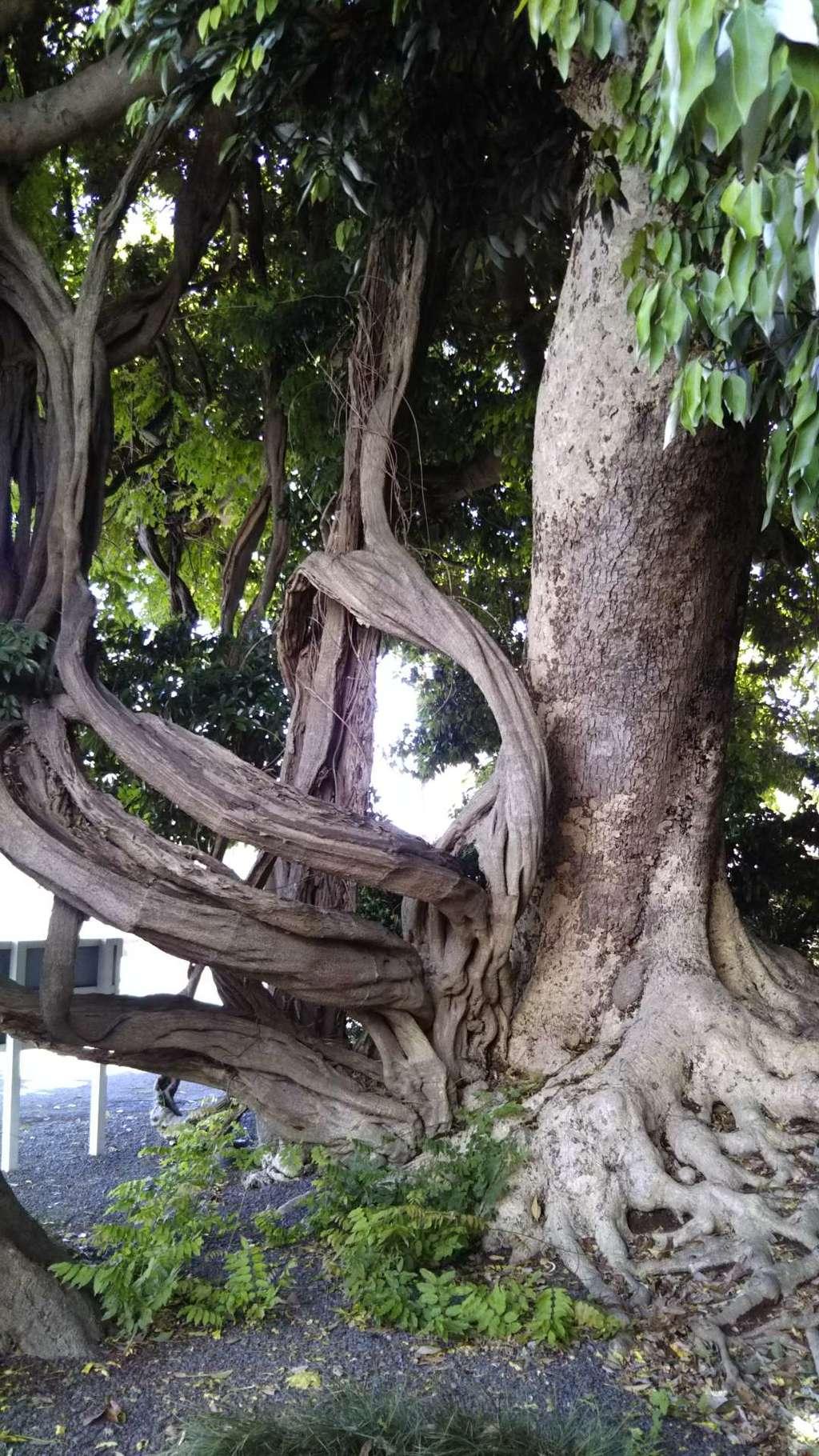 神社(名称不明)の自然