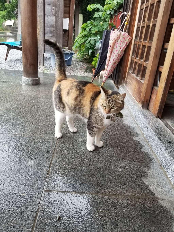 前玉神社の動物