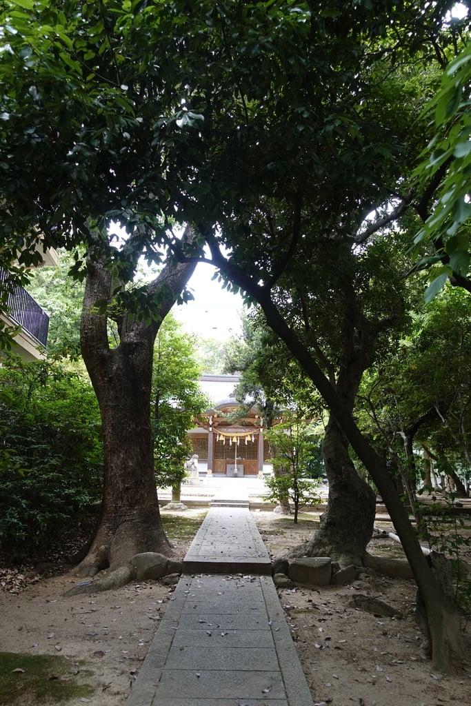 新家春日神社の建物その他