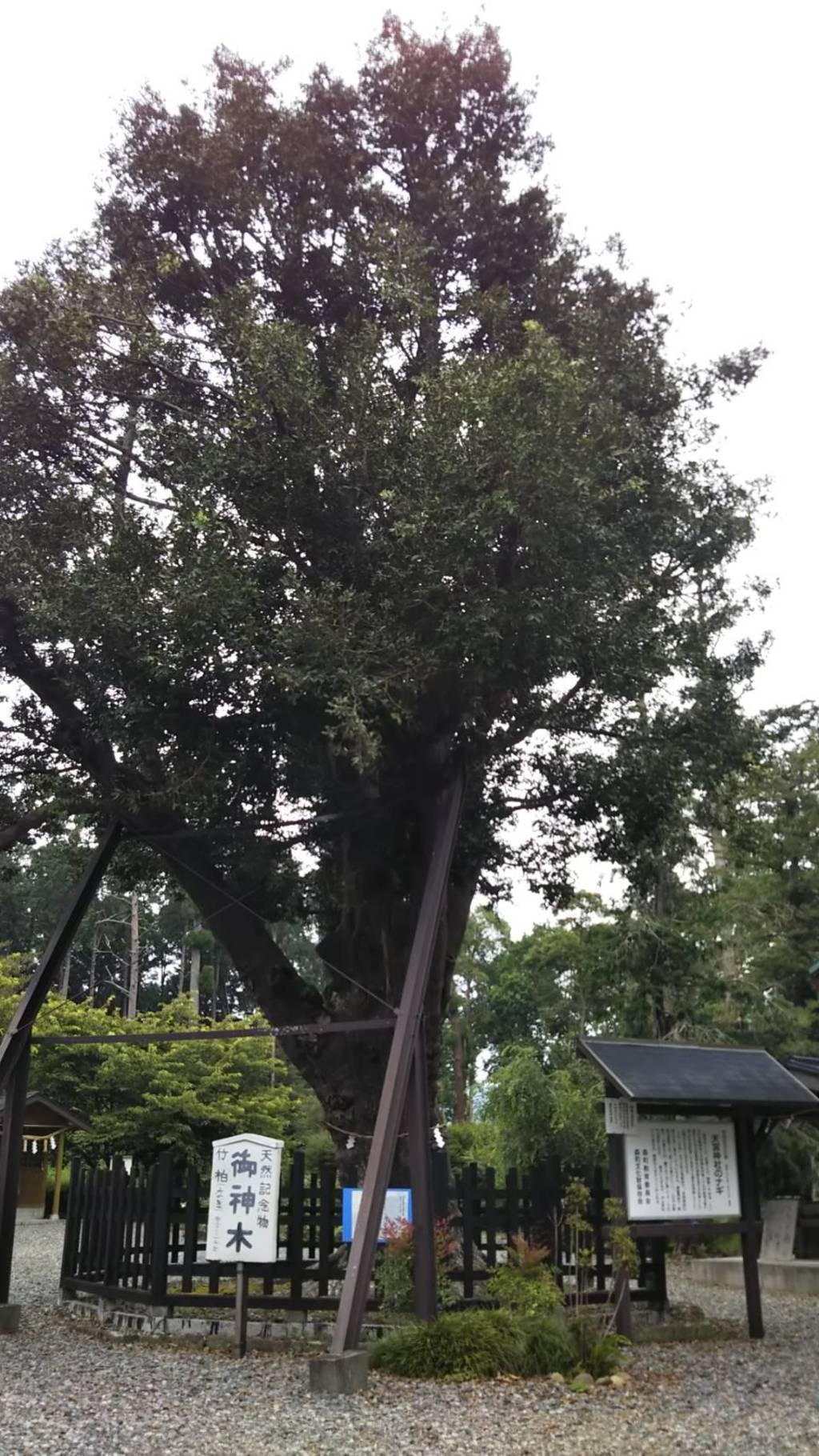 天宮神社の自然