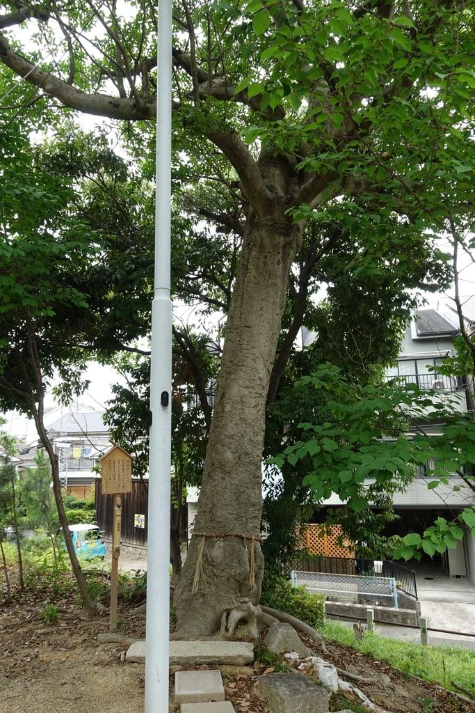甲鉾神社の自然