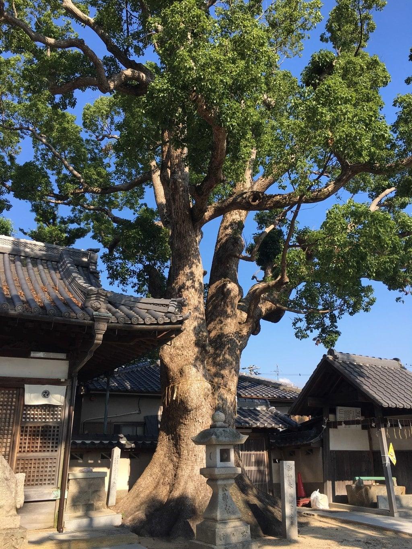 踞尾八幡神社の建物その他