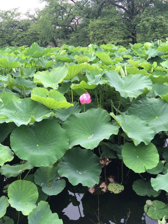 花園稲荷神社の自然