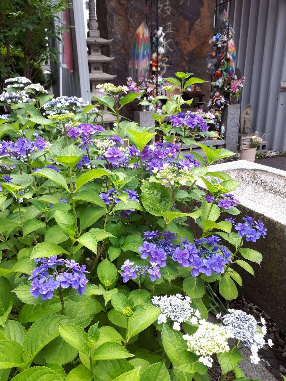 豊川稲荷札幌別院(玉宝禅寺)の自然