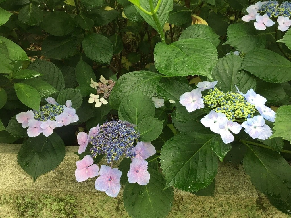 静岡県護国神社の自然