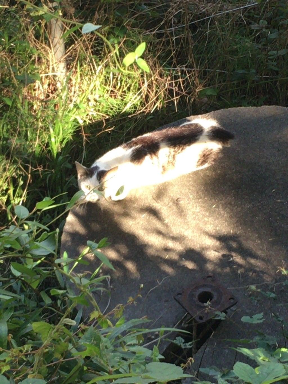 鹿島神社の動物
