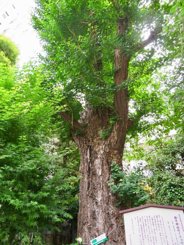 雉子神社の自然