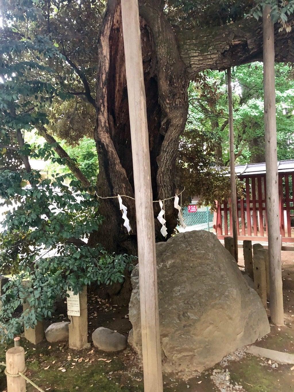 金王八幡宮の自然